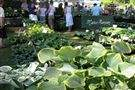 We visit several Plant Fairs in the Hosta season